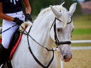nauka jazdy konnej rzeszów